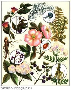 Лекарственные растения - помощники при лечении отеков