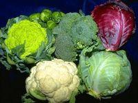 Рецепты блюд из капусты из русской кухни