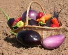Ассорти из помидор и арбуза – кулинарный рецепт