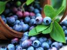 Черника в собственном соку с фруктами
