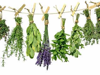 Как правильно собрать и заготовить лекарственные растения