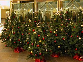 Как купить и установить живую новогоднюю елку?