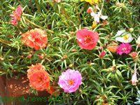 Огородные растения