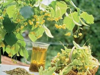 Лечебные чаи при уходе за жирной кожей лица. Лекарственные растения в рецептах красоты