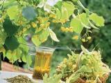 Лекарственные растения являются важным фактором, дополняющим соответствующую диету.