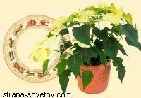 Комнатные растения по знакам Зодиака