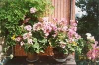 Домашние цветники