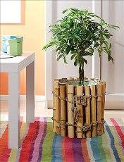 Уход за комнатными растениями весной и летом.