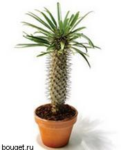 Ваши комнатные растения