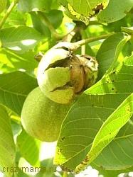 Народные методы лечения лекарственными растениями