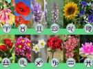 Домашние растения-талисманы для разных знаков Зодиака