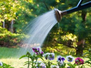 Поливайте  цветы правильно