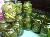 Рецепты соления огурцов