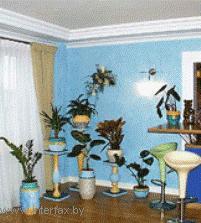 Сезонный уход за комнатными растениями