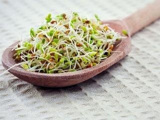 Пророщенные зерна. Растения для вашей красоты и здоровья
