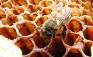 Лечение медом (рецепты народной медицины)