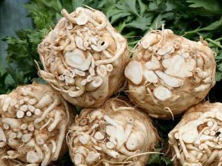 Рецепты блюд из корневого сельдерея