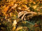 Осенние работы в саду, огороде
