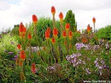 Выбор растений для цветников