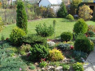 Осенние работы на даче. Высадка хвойных растений