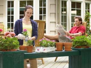 Уход за комнатными растениями весной