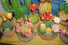 Кактусы. Как вырастить кактус