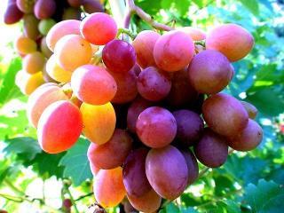 Виноградная диета 2