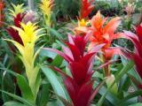 Домашние растения и уход за ними