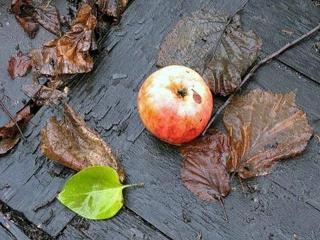Что нужно сделать в саду, огороде осенью?