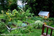 Работы в саду, на даче