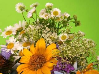 Натуральная косметика.  Полевые цветы в рецептах красоты